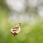 Swinging leaf by Elisabeth Dubois