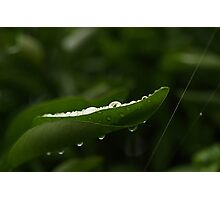 water drops 1 Photographic Print