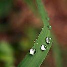 water drops 2 by Elisabeth Dubois