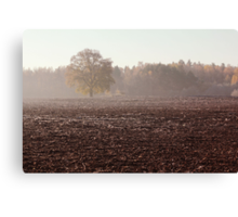 Lonely oak in frosty day Canvas Print