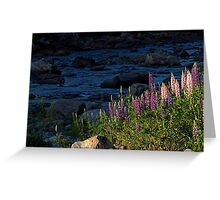 Lupines on Blue Greeting Card