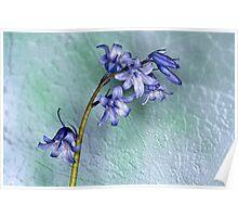 Bluebells Textured Poster