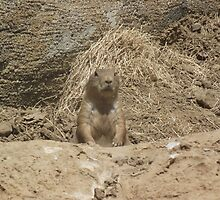 Groundhog  by JoelleAlice