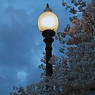 Japanese Cherry Blossoms and Street Lamp by Bine