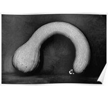 Butternut squash (Cucurbita moschata) Plate No.# IV Poster