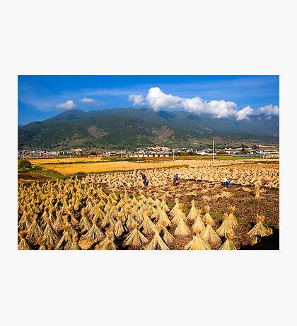 High Altitude Farming Photographic Print