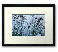 flowers and seeds of thistle Framed Print