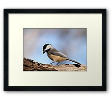 Black Capped Chickadee Framed Print