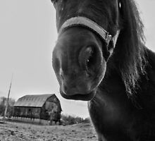 The farmer called him Mister Ed, but his name was actually Robespierre by Heather King