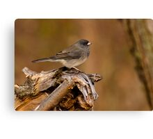Dark-eyed Junco Canvas Print
