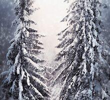 Winter Light by Svetlana Sewell