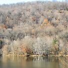 November In The Ramapo Mountains by joan warburton