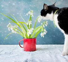 Taking Time to Smell the Flowers by Linda Lees