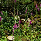 Foxgloves in Devon by kalaryder