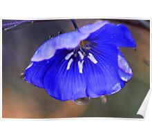 Blue Flax Umbrella Poster