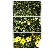Yellow Flower Triptych Poster