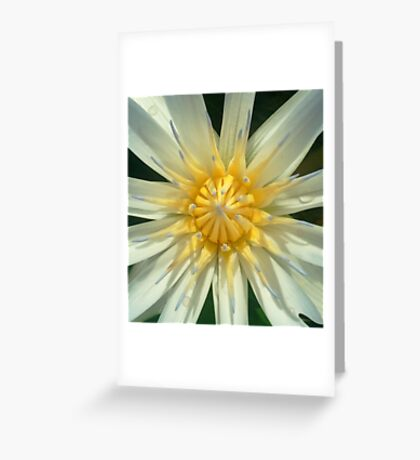 Invincible Summer ... Greeting Card