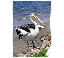 Pelican Series Poster