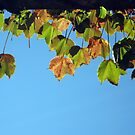Sunning Autumn Leaves by Arlene Zapata