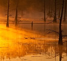 Golden Dawn on the Bayou  by Michelle  Morris