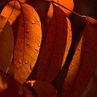Crimson by Sue  Cullumber