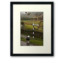 Lost Sheep, Lake District, England Framed Print