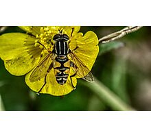 fly resting on flower Photographic Print