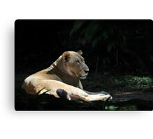 Lion at The Singapore Zoo. Canvas Print