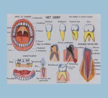 schoolplaat: het gebit by Daan de Groote