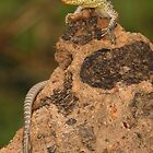 Spotted Tree Monitor by Catherine Whitehead