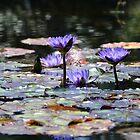 Lotus Flower, Myrtle Beach by suz01