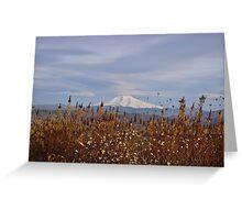 Long shot of Mt. Hood thru barley Greeting Card