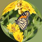 Monarch Paper Weight  by NewfieKeith