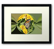 Monarch Paper Weight  Framed Print