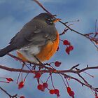 Rockin&#x27; Robin by Arla M. Ruggles