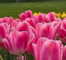 Hobart in Spring by Brett Rogers