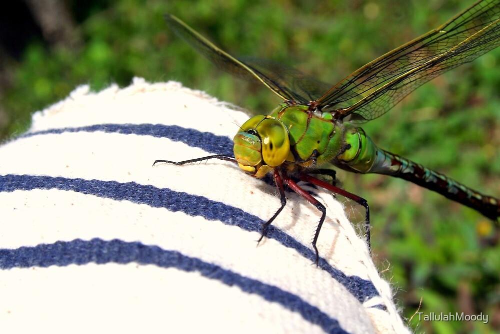 Dragonfly by TallulahMoody