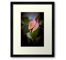 Fushcia Bud Framed Print