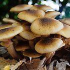 Fungi, Jardin du Rosaire, Lyon, France by Andrew Jones