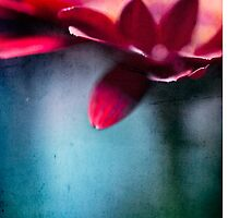 nel mio cuore II iPhone Case by Adriana Glackin