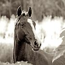 Young Warmblood by Renee Hubbard Fine Art Photography
