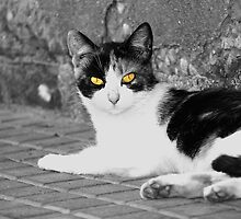 Yellow eyes by DavidCucalon