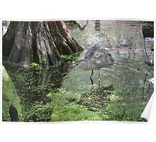 Waterbird Poster
