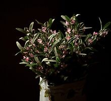 Flowers near the window by Stavros Charakopoulos