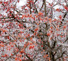 Ice Berries by Carolyn  Fletcher