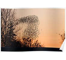 Murmuration of Starlings at Gretna Poster