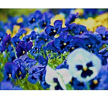 Floral Love Story . (7). by Brown Sugar. Views 189 . favorited by (2) thx! Photographic Print