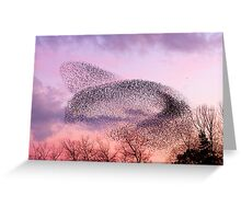 Murmuration of Starlings, November 5th 2011 Greeting Card