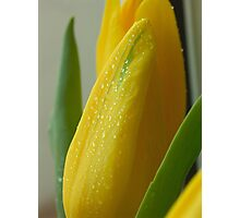 Floral Love Story . (8). by Brown Sugar. Views - 154. Photographic Print