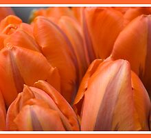 Floral Love Story . (9). by Brown Sugar. Views 207 . thank you ! by © Andrzej Goszcz,M.D. Ph.D
